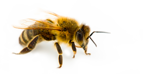small-bee.png